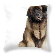Leonberger Dog Throw Pillow
