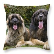 Leonberger Dogs Throw Pillow