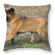 Leonberger Puppy Throw Pillow
