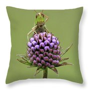 Lesser Marsh Grasshopper Chorthippus Throw Pillow