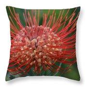 Leucospermum - Pincushion Protea - Tropical Sunburst Protea Flower Hawaii Throw Pillow