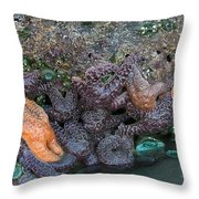 Life On The Rock Throw Pillow