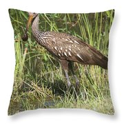 Limpkin In The Glades Throw Pillow