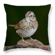 Lincoln Sparrow Throw Pillow