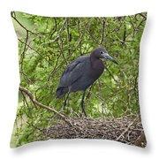Little Blue Heron Nesting Texas Throw Pillow