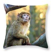 Little Monkey Throw Pillow