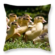 Yellow Muscovy Duck Ducklings Running In Hurry  Throw Pillow