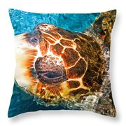 Loggerhead Sea Turtle Throw Pillow
