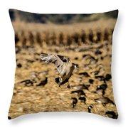 1 Lone Aleutian Landing Throw Pillow