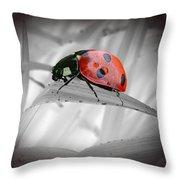 Lone Ladybug Throw Pillow