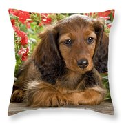 Long-haired Dachshund Throw Pillow