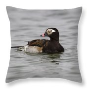 Longtailed Duck Throw Pillow