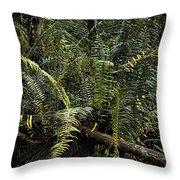 Loxahatchee Refuge-4 Throw Pillow
