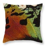 Madagascan Sunset Moth Wing Detail Throw Pillow