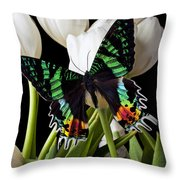 Madagascar Butterfly Throw Pillow