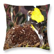 Male American Goldfinch Throw Pillow