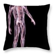 Male Anatomy Throw Pillow