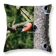 Male Bullfinch Throw Pillow