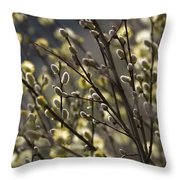male catkins of willow species in the National Park Dwingelderveld Netherlands Throw Pillow
