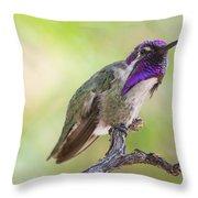 Male Costa Hummingbird Throw Pillow