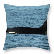 Male Orca Killer Whale In Monterey Bay California 2013 Throw Pillow