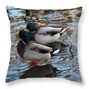 Mallard Drakes  Throw Pillow