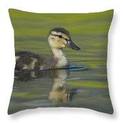 Mallard Duck Swimming In Marsh Pond Throw Pillow