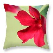 Mandevilla Named Sun Parasol Crimson Throw Pillow