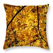 Maple Tree In Yellow Fall Colors Throw Pillow