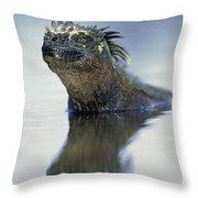 Marine Iguana Galapagos Islands Throw Pillow