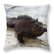 Marine Iguana Galapagos Throw Pillow