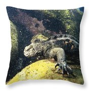 Marine Iguana Grazing On Seaweed Throw Pillow