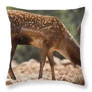 Mesopotamian Fallow Deer 2 Throw Pillow