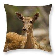 Mesopotamian Fallow Deer 3 Throw Pillow