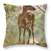 Mesopotamian Fallow Deer 5 Throw Pillow