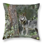 Mexican Grey Wolf 1 Throw Pillow