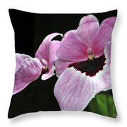 Miltoniopsis Alger Throw Pillow