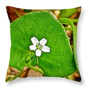 Miner's Lettuce In Park Sierra Near Coarsegold-california  Throw Pillow