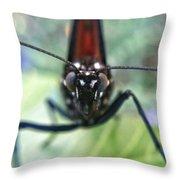 Monarch Stare Throw Pillow