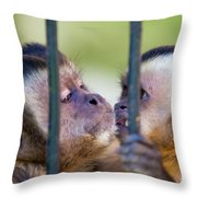 Monkey Species Cebus Apella Behind Bars Throw Pillow