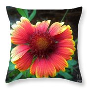 Morning Beauty Throw Pillow