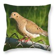 Morning Dove I Throw Pillow