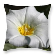 Morning Glory Named White Ensign Throw Pillow