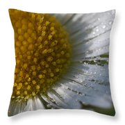 Mornings Dew Throw Pillow