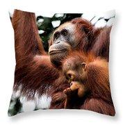Mother And Baby Orangutan Borneo Throw Pillow