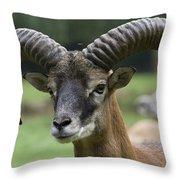 Mouflon Hochwildpark Rhineland Kommern Mechernich Germany Throw Pillow