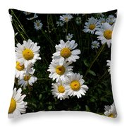 Mountain Daisies Throw Pillow