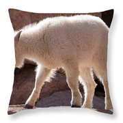 Mountain Goat Kid On Mount Evans Throw Pillow