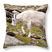 Mountain Goat On Mount Evans Throw Pillow