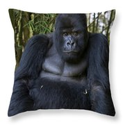 Mountain Gorilla Silverback Throw Pillow